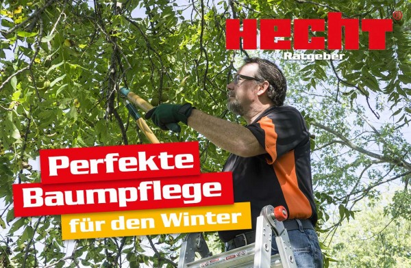 die-perfekte-baumpflege-fuer-den-winter