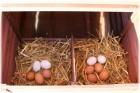 Hühnerstall Hühner-Freiland-Farm XXL