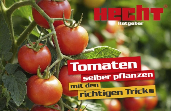 tomaten-zuhause-anpflanzen